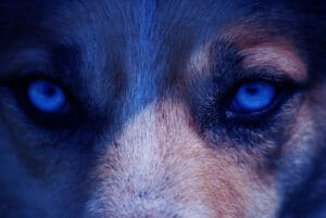 Dogs Mysteriously Turning Blue and Pink in Russia