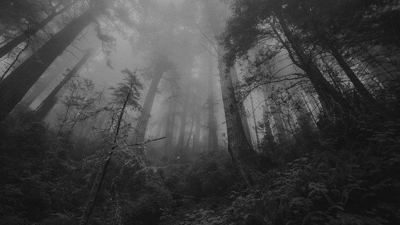 Romania, in Transylvania, the Hoia Baciu forest