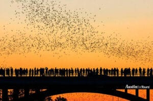 Texas Bat-Watching The Unusual Tourist Attraction_