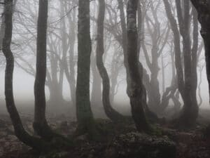 Visit Hoia Baciu the World's Most Haunted Forest