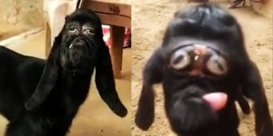 Mutant Goat Born With 'Human' Face Being Worshipped Like A Divinity