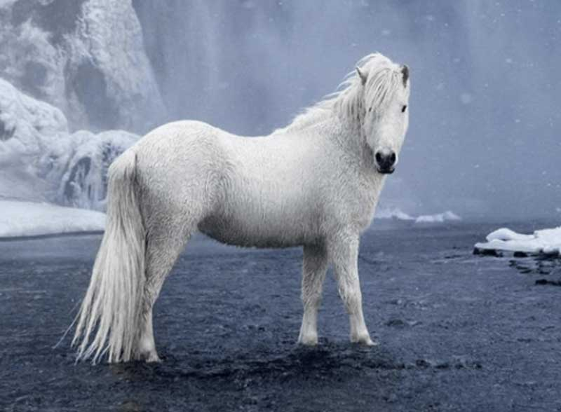 The-Fairytale-Photos-Of-Wild-Horses-Living-In-Iceland
